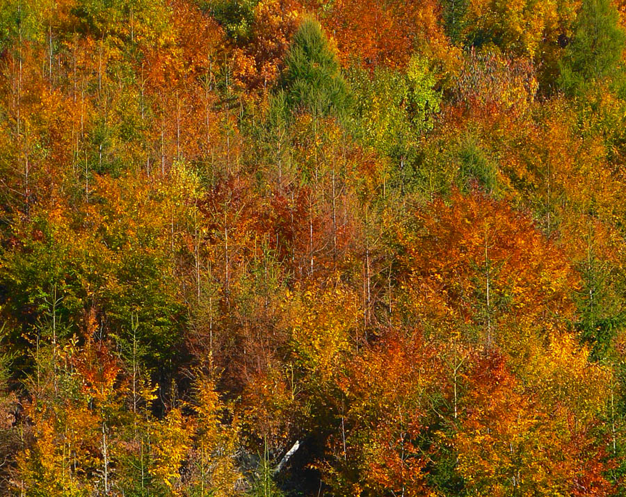 gycova-jesen-v-traverzoch-sucheho